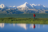 Hiker in Denali National Park pauses by tundra pond, Mt. brook, Alaska Range in background.