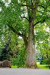 Magnoliaceae - Magnoliengewächse