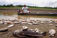 Pescador passa em sua canoa em meio a peixes mortos no lago dos Reis.<br /> Careiro, Amazonas, Brasil.<br /> 18/10/2005<br /> Foto AntÙnio Lima/Interfoto