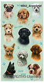 GIORDANO, CUTE ANIMALS, LUSTIGE TIERE, ANIMALITOS DIVERTIDOS, paintings+++++,USGIBREEDSCN,#ac#, EVERYDAY,dogs