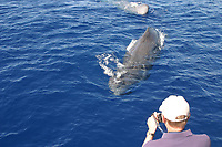 whale watching, sperm whale, Physeter macrocephalus, Azores Island, Portugal, North Atlantic