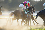 FUCHU,JAPAN-FEBRUARY 17: Fame Game,ridden by Christophe Lemaire,enters 1st turn at  the Diamond Stakes at Tokyo Racecourse on February 17,2018 in Fuchu,Tokyo,Japan (Photo by Kaz Ishida/Eclipse Sportswire/Getty Images)