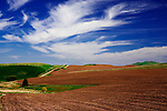 Scenic fields in winter wheat and fallow off Tidwell Road near the town of Palouse in Washington's famous Palouse Country, a breadbasket of the United States and a cornicopia of landscape.  Windblown clouds.  Contour plowing.  Country road.