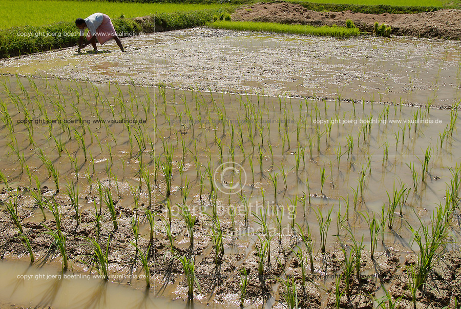 INDIEN Westbengalen , Dorf Gandhiji Songha , Farmer Madhusudan Mahato , Landwirtschaft, Anpassung an den Klimawandel, Verbesserung des Anbau durch SRI System zur Intensivierung des Reisanbau - INDIA Westbengal village Gandhiji Songha , SRI paddy cultivation - poverty reduction rural development