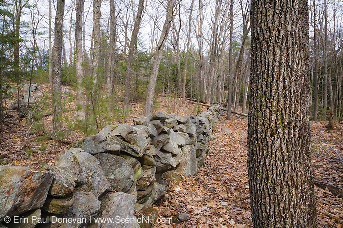 Stone wall in Sandown, New Hampshire Town Forest during the spring months.