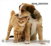 Kim, ANIMALS, fondless, photos, GBJBWP21994,#A# Tiere ohne Fond, animales sind fondo