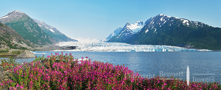 A field of fireweed adds color to Spencer Glacier and Spencer Lake in Alaska on a perfect summer evening.