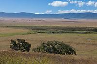Tanzania. Ngorongoro.  Scenic View across the Caldera.  Hippo Pool in Center.
