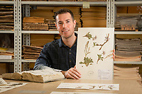 Alaska Center for Conservation Science lead botanist Justin Fulkerson holds a specimen of the plant on which he based his master's thesis, Parrya nudicaulis -- Parry's Wallflower, as he discusses specimens in the collection of Alaska plants in UAA's Herbarium in Beatrice McDonald Hall.