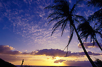 A person enjoys sunset with high clouds and palm trees outside Lahaina along the coastline.