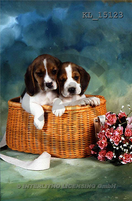 Interlitho, Alberto, ANIMALS, dogs, photos, 2 dogs in basket(KL15123,#A#) Hunde, perros