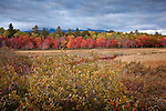 Fall foliage and Winterberries near Mt Katahdin in Baxter State Park, Piscataquis County, ME, USA