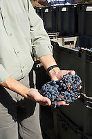 Miguel Louro owner aragones grapes quinta do mouro alentejo portugal