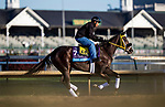 October 29, 2018 : Well Defined, trained by Kathleen M. O'Connell, exercises in preparation for the Breeders' Cup Juvenile at Churchill Downs on October 29, 2018 in Louisville, Kentucky. Evers/ESW/CSM