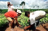 Trabalhadoras rurais separam pés de pupunha para plantação,  em projeto agroindustrial financiado pela Sudam  para produção de palmito próximo a transamazônica, Altamira, Pará Brasil.<br />21/03/2001.<br />Foto Paulo Santos/Interfoto