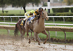 3 October 2009: AWESOME GEM with jockey David Flores pull away from the pack in the 73rd running of the G2 Hawthorne Gold Cup at Hawthorne Race Course in Cicero/Stickney, Illinois.