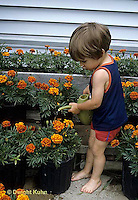 FA01-021z  Child watering marigolds - Tagetes spp.