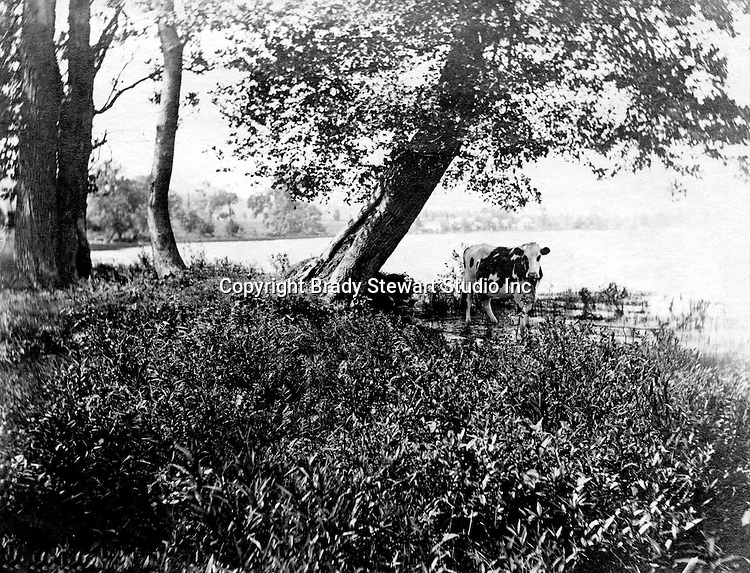 Lakewood NY:  Cow getting a drink of water in Lake Chautauqua. Photographs were taken during a church field trip to Chautauqua Institution in New York (Lake Chautauqua). The Stewart family and friends visited Chautauqua during 1901 to hear Stewart's relative, Dr. S.H. Clark speak at the institute. Alice Brady Stewart chaperoned and Brady Stewart came along to photograph the trip.  The Gallery provides a glimpse of how the privileged and church faithful spent summers at Lake Chautauqua at the turn of the century.
