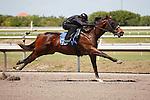 #93Fasig-Tipton Florida Sale,Under Tack Show. Palm Meadows Florida 03-23-2012