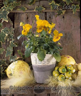 Interlitho-Alberto, FLOWERS, BLUMEN, FLORES, photos+++++,yellow flowers,KL16533,#f#, EVERYDAY