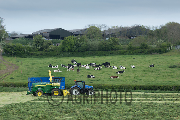 Contractors chopping the first cut of grass silage <br /> Picture Tim Scrivener 07850 303986<br /> ….covering agriculture in the UK….