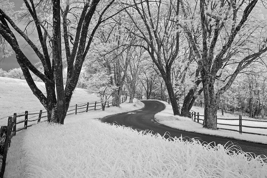 The driveway to William Monroe's Ashlawn-Highlands in Albemarle County, VA.