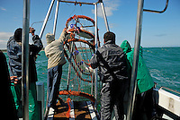 Mariners on a boat geared for the Great White Shark watching are putting the diving cage into the water, Gansbaii, Dyer Island, South Africa