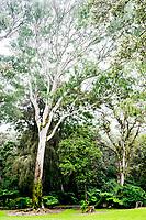 Lush Kalopa State Park, Hamakua district of the Big Island of Hawai'i.