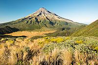 Taranaki, Mt. Egmont and alpine vegetation, Egmont National Park, North Island, New Zealand, NZ