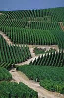 Europe/France/Champagne-Ardenne/51/Marne/Vallée de la Marne/Cramant: Vignoble champenois