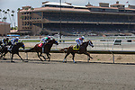 JUL 30,2014:Horses and the stand at Del Mar in Del Mar,CA. Kazushi Ishida/ESW/CSM