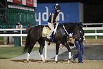 March 25, 2021: UAE Derby contender Yaupon trains on the track for trainer Steve Asmussen at Meydan Racecourse, Dubai, UAE.<br />