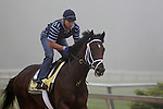 Preakness contender Dance City gallops Thursday morning, May 19, 2011, at Pimlico Race Course in Baltimore, MD. (Joan Fairman Kanes/EclipseSportswire)