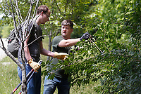 Nate Weston (right), geospatial ecologist with the Beaver Watershed Alliance, speaks with volunteer Seth Carney Friday, June 4, 2021, about the bush honeysuckle at Kessler Mountain Regional Park. The Alliance partnered with the city of Fayetteville Parks and Recreation to teach volunteers how to identify the highly invasive plant, that was introduced from Asia in the 1800's, and how to remove it. Check out nwaonline.com/210605Daily/ and nwadg.com/photos for a photo gallery.<br /> (NWA Democrat-Gazette/David Gottschalk)