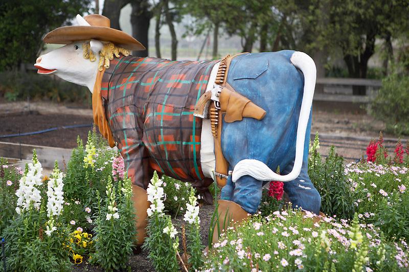 Artistic cow. Napa Valley, California