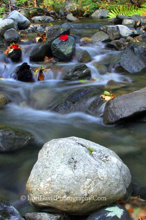 Autumn Brook  #L4