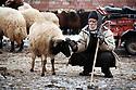 Turkey 2005 An old man and his sheep at tne sheep market in Dogubayazit in winter  Turquie 2005  Un vieil homme avec son mouton au marché des moutons à Dogubayazit en hiver