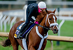 November 1, 2020: Point Of Honor, trained by trainer George Weaver, exercises in preparation for the Breeders' Cup Distaff at Keeneland Racetrack in Lexington, Kentucky on November 1, 2020. Scott Serio/Eclipse Sportswire/Breeders Cup /CSM