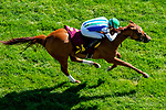 September 18, 2021: Musical Ride #14, ridden by jockey Sahin Civaci wins an allowance race on the turf at Woodbine Racetrack in Toronto, Ontario Canada on September 18th, 2021. Scott Serio/Eclipse Sportswire/CSM