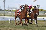 February 21, 2015: #1Main Sequence (KY) with jockey Rajiv Maragh on board wins the Mac Diarmida Stakes G2  at Gulfstream Park in Hallandale Beach, Florida.    Liz Lamont/ESW/CSM