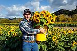 Fresh picked sunflowers at Avila Valley Barn, farm stand and petting zoo in Avila Valley, San Luis Obispo County, California (Jake)