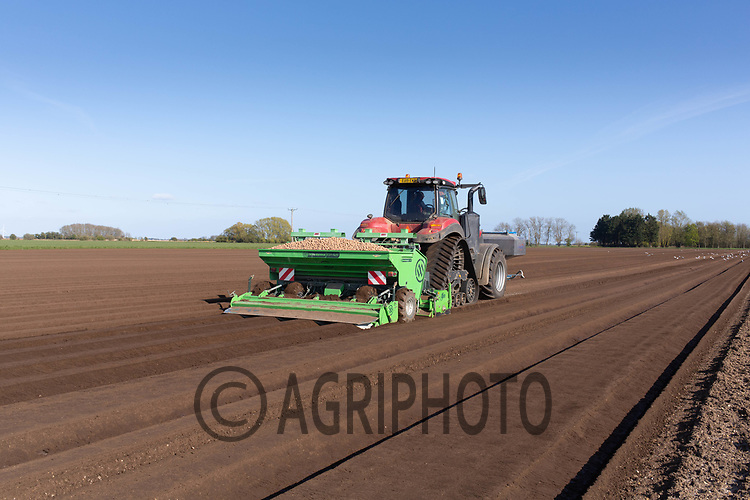 21-4-2021 Planting potatoes in the Lincolnshire Fens <br /> ©Tim Scrivener Photographer 07850 303986<br />      ....Covering Agriculture In The UK....