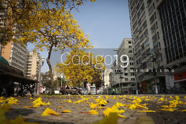 Campinas (SP), 25/08/2021 - Ipes amarelos colorem o centro de Campinas, interior de São Paulo, no Largo do Rosário na região central da cidade nesta quarta-feira (25).