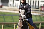 Paddy O'Prado, Kentucky Derby 136 contender at Churchill Downs. 04.19.2010