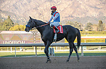 ARCADIA, CA JANUARY 30: #1 Medina Spirit, ridden by Abel Cedillo, returns to the connections after winning the Robert B. Lewis Stakes (Grade lll) on January 30, 2021 at Santa Anita Park in Arcadia, CA by Casey Phillips/EclipseSportswire/CSM)