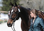 April 23, 2014: No Boundaries and Erin Sylvester during the first horse inspection at the Rolex Three Day Event in Lexington, KY at the Kentucky Horse Park.  Candice Chavez/ESW/CSM