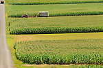 Fieldscape near Mifflinburg, PA. with corn fields and tractor mowing silage.