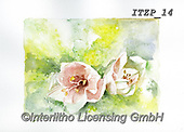 Franco, FLOWERS, BLUMEN, FLORES, paintings+++++,ITZP14,#f#, EVERYDAY