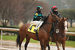 February 6, 2021: Mucho (4) with jockey Joseph Talamo aboard before the running of the King Cotton Stakes at Oaklawn Racing Casino Resort in Hot Springs, Arkansas on February 6, 2021. Justin Manning/Eclipse Sportswire/CSM