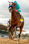 ARCADIA, CA  MARCH 7: #4 Authentic, ridden by Drayden Van Dyke, wins the San Felipe Stakes (Grade ll) on March 7, 2020, at Santa Anita Park in Arcadia, CA. (Photo by Casey Phillips/Eclipse Sportswire/CSM